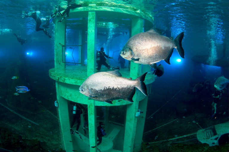 Duiken met 2500 vissen TODI Belgie