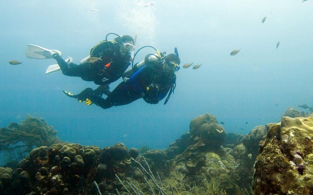 Zeeland dag duiken