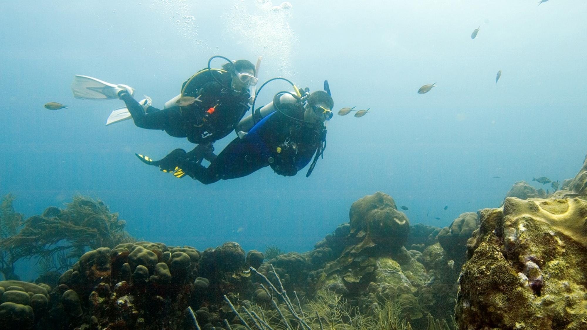 Padi Diep diver