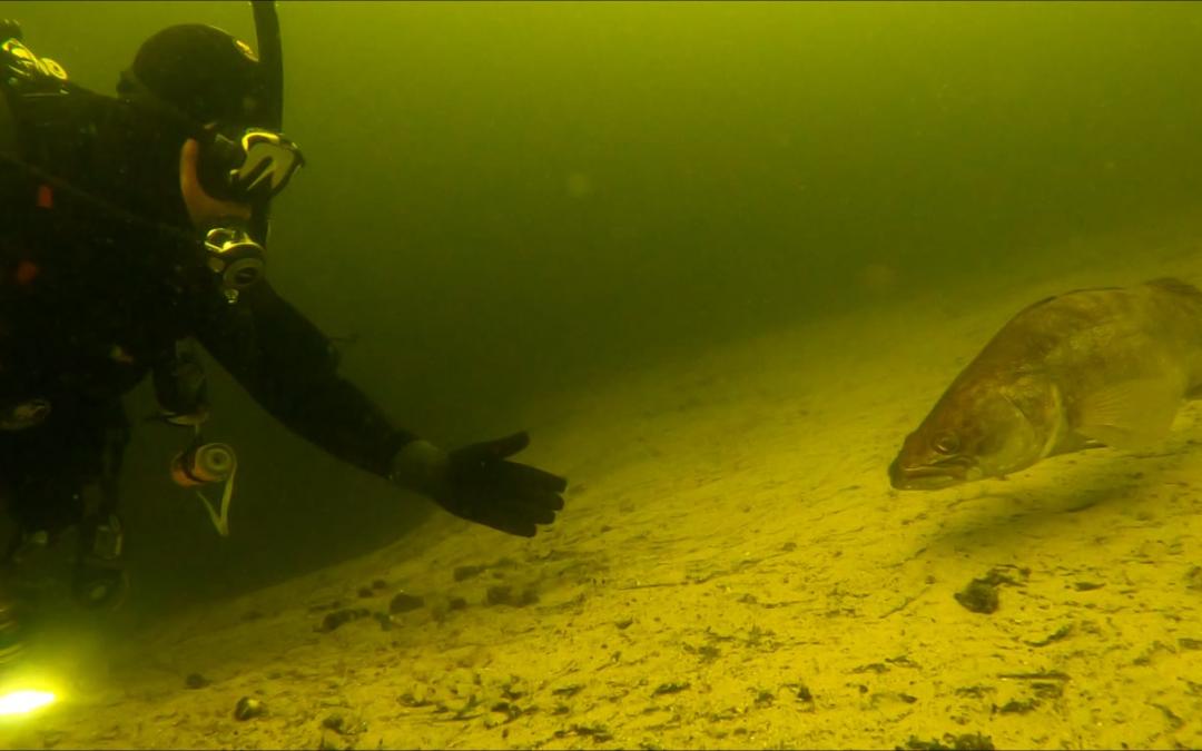 Buitenwater duiken